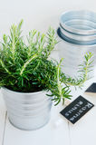 Rosemary herb in a planter with chalkboard Stock Images