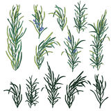 Rosemary herb set Stock Photography