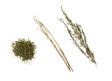 Rosemary, herb and spice Royalty Free Stock Photography