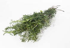 Rosemary. Herb on white background Royalty Free Stock Image