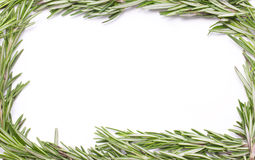 Rosemary Herbal Frame. Fotografia de Stock