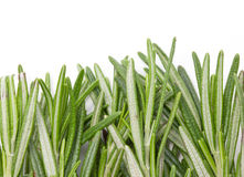 Rosemary Herbal Frame. Royalty Free Stock Images
