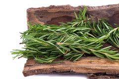 Rosemary Herbs and Medicinal herbs. Organic healing herbs. fresh. Rosemary bunch rosemary isolated on white background stock images