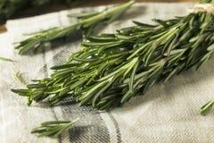 Rosemary Herbs orgânica verde crua foto de stock