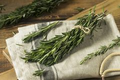 Rosemary Herbs orgânica verde crua imagem de stock royalty free