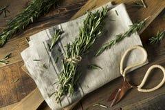 Rosemary Herbs orgânica verde crua fotos de stock royalty free