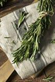Rosemary Herbs orgânica verde crua fotos de stock