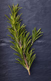 Rosemary herbs with a small piece of rosemary beside it stock photo