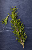 Rosemary herbs with a small piece of rosemary beside it royalty free stock image