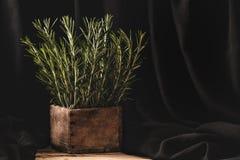 Rosemary im hölzernen por auf dunklem Hintergrund Stockfoto