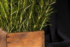 Rosemary im hölzernen por auf dunklem Hintergrund Stockfotos
