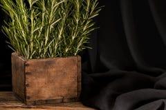 Rosemary im hölzernen por auf dunklem Hintergrund Stockbild