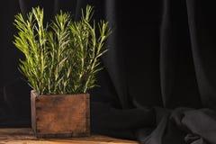 Rosemary im hölzernen por auf dunklem Hintergrund Lizenzfreie Stockfotografie