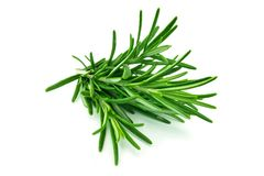 Rosemary a isolé image stock