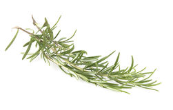 Rosemary isolated. On white background Royalty Free Stock Photography