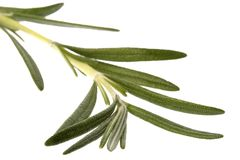 Rosemary Isolated Royalty Free Stock Images