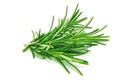 Rosemary isolated stock photo