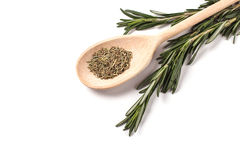 Rosemary isolated. Fresh sheaf of rosemary with rosemary spice lying in wooden spoon isolated on white Royalty Free Stock Image