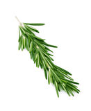 Rosemary isolated on white Stock Image