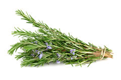 Rosemary isolated on white Royalty Free Stock Images