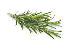 Rosemary isolated on white background Royalty Free Stock Photos