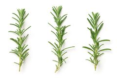 Rosemary Isolated on White Background. Top view Stock Image