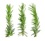 Rosemary isolated on white background Top view Stock Photo