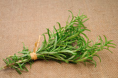 Rosemary on a jute canvas Stock Image