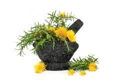 Rosemary-Kraut und wilde Blumen stockfotografie