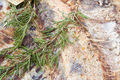 Rosemary on lard Royalty Free Stock Photos