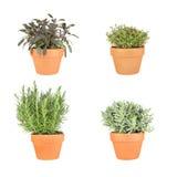 Rosemary, Lavendel, Salie en Thyme Royalty-vrije Stock Fotografie