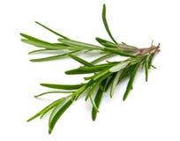 Rosemary leaf Stock Photo