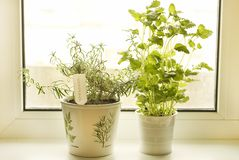 Rosemary and lemon balm Stock Photography