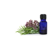 Rosemary and Marjoram Herbs royalty free stock image