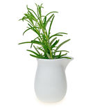 Rosemary in milk jug Stock Photos