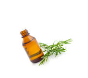 Rosemary oil Royalty Free Stock Images