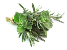 Rosemary and oregano Royalty Free Stock Photos