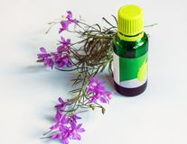 Rosemary organic essential oil. stock photography