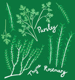 Rosemary, Parsley and Thyme Royalty Free Stock Images