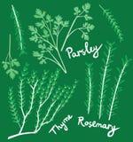 Rosemary, persil et thym Images libres de droits
