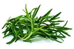 Rosemary Plant royaltyfri foto