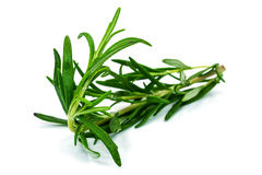 Rosemary Plant image libre de droits