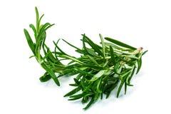 Rosemary Plant Stock Photo