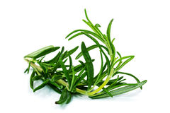 Rosemary Plant Royalty Free Stock Photography