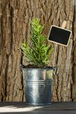A rosemary plant in a pot. In front of a tree trunk stock photos