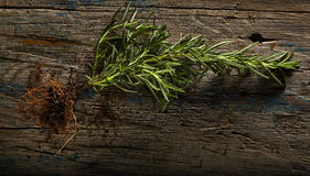 Rosemary with roots Royalty Free Stock Images