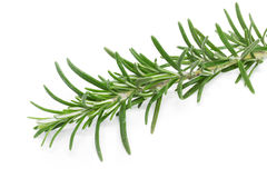 Rosemary (Rosmarinus officinalis). On white background Stock Images