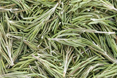 Rosemary (Rosmarinus officinalis). Stock Image