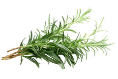 Rosemary Rosmarinus officinalis, paths. Rosemary Rosmarinus officinalis bundle. Clipping path, shadowless Stock Image