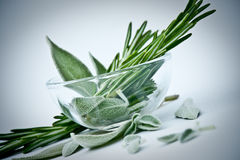 Rosemary and sage Stock Images